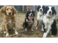 Bailey's Buddies - Dog walkies, day & night care and lots of cuddles!