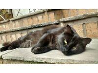 Missing cat ashley down