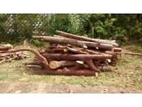 Logs for saw some sawn some not.