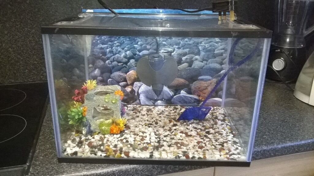 Aquarium fish tank elite filter included in sighthill for Elite fish house