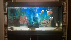 160 litre fish tank . juwel aquarium