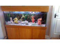 Fish Tank & Teak Cabinet with Pump, Light, Ornaments and 5 Silver Dollar Fish