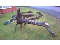 Tree with roots (dead) for Wood Carving - Log Burner - Garden Feature. Over 5 feet Tall. Heavy