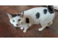 Male cats for rehoming 10 pound each