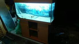 Stunning set if 4th tank with everything except fish bargain: £220 COST OVER £1000