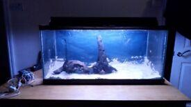 Fish tank set up for sale (no fish)