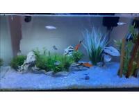 12 gallon Fish tank