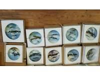 RAF bone china wall mounted collector plates