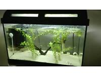 Fish tank , stand and fish