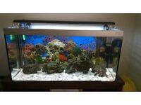 120l marine fish tank aquarium must go!
