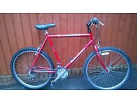 Large Raleigh Mountain Bike..A Big Bike for the Taller Man.. Small Price £66..Choice of many Bikes