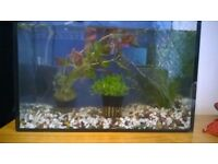 Fish Tank, Fish Food, Fish Tank Filter
