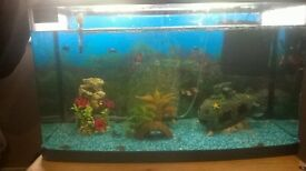 tropical fish and tank for sale