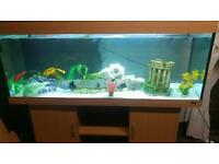 5 FT JEWEL RIO 400.450 LITRE FISHTANK WITH BEECHWOOD CABINET IN GOOD CONDITION
