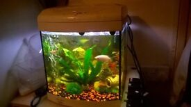 fish tank aqua one starter tank great for fry or a beginers tank for kids