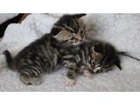 Beautful female kitte