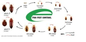 EPRO PEST CONTROL 416-834-3789(RELIABLE)