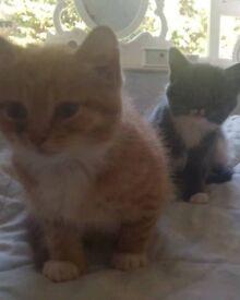 beautiful kittens for sale stroud