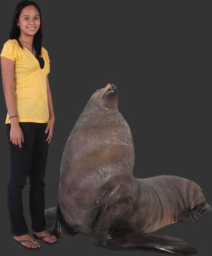 Male fur Seal