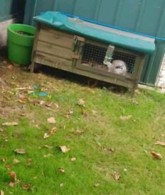 Rabbit hutch with rabbit