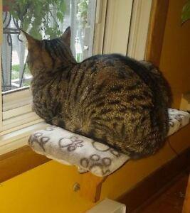 Tablle pour chat