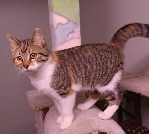 Kittenaide rescued cats & kittens Windsor Region Ontario image 9