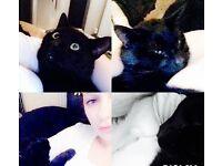 MISSING ALL BLACK CAT