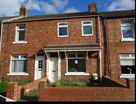 3 Bed Terrace to let on Albion Avenue, Shildon