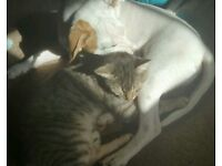 Male car URGENT HOME NEEDED 1year old male cat friendly fine with dogs