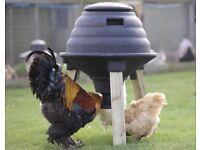 Emperor Feeder chicken duck poultry