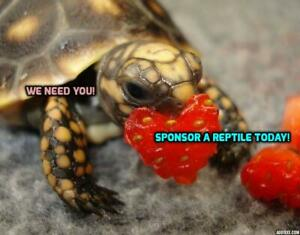 Drayton Valley Reptile Rescue Sponsorship Program!