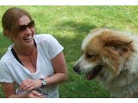 DOG BOARDING ,DOGGY DAY CARE, DOG WALKING. BEATA'S DOG WALKING PET SITTING SERVICE