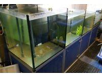 Shop tanks - breeding tropical fish frags coral marine