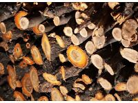 Apple firewood timber