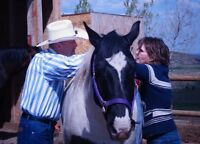 Equine Assisted Learning  Horses Touching Hearts