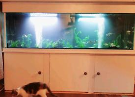 6.5 foot aquarium