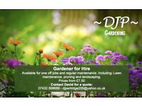 Experienced gardener for hire