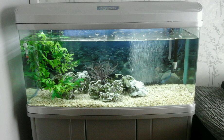 1 Metre Silver Fish Tank Aquarium With Silver Stand And