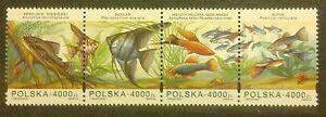 POLAND STAMPS MNH 1Fi3357-60 SC3212 Mi3505-08 - Aquarium fishes, 1994, clean - <span itemprop=availableAtOrFrom>Reda, Polska</span> - POLAND STAMPS MNH 1Fi3357-60 SC3212 Mi3505-08 - Aquarium fishes, 1994, clean - Reda, Polska