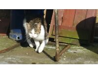 Found cat in handsworth area