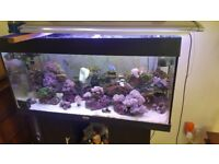 Cheap marine corals for sale