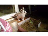 1 year female rabbit - free to a good home.