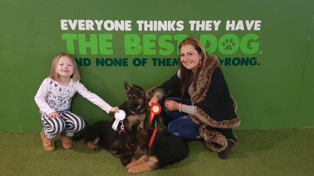 German Shepherd puppies for sale | in Hull, East Yorkshire | Gumtree