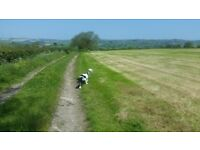 Well Established Dog Walking Business For Sale