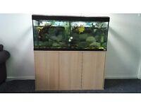 240L Fluval Roma fish tank - aquarium