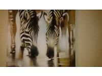 A zebra Canvas