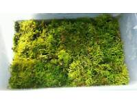 Two types of Reptile/amphibian moss