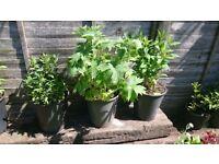 Garden plants various varieties available