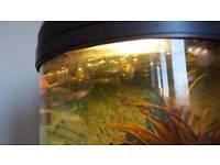 fish gupick