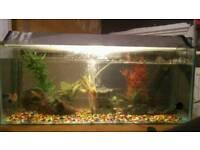 full set up fish tank